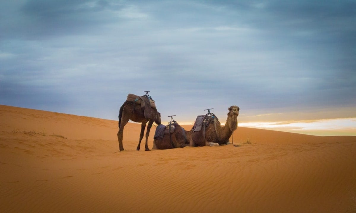 Marathon Des Sables ultra marathon Sahara